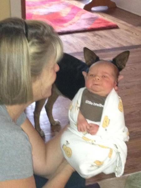 baby-dog-ears