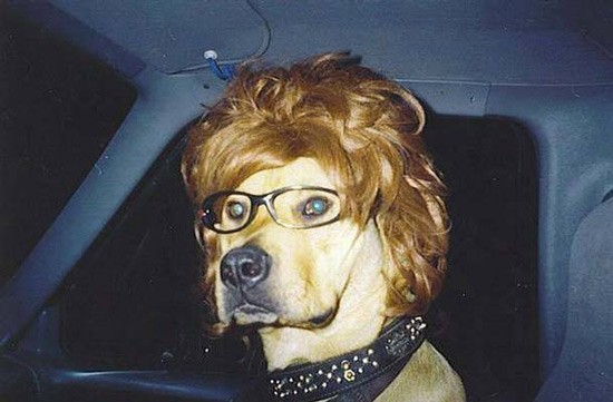 dog-in-wig