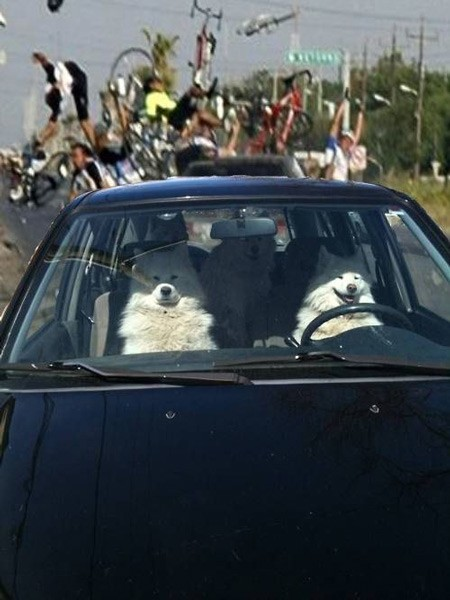 dogs-driving-car